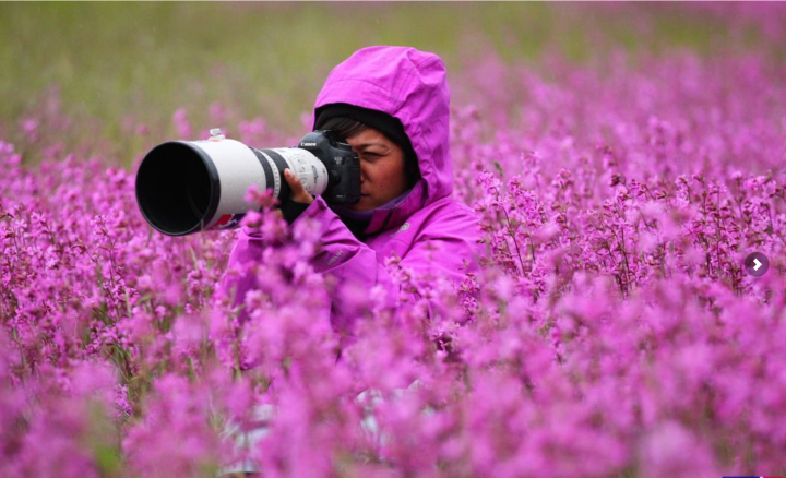 Photographer in the middle of a field of flowers